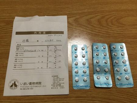 20160812今井動物病院09