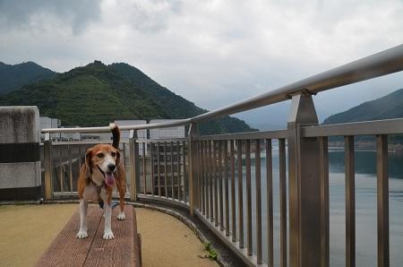 20160812宮ケ瀬湖10
