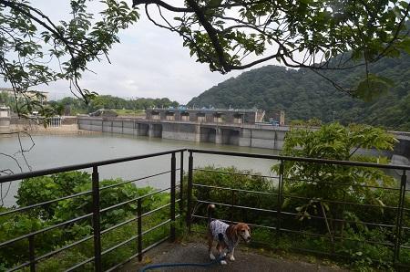 20160823津久井湖13