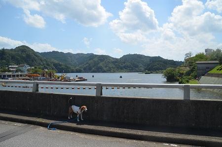 20160831亀山ダム13