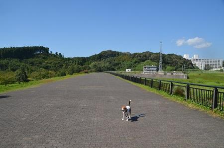 20160831矢那川ダム05