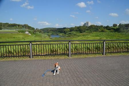 20160831矢那川ダム07