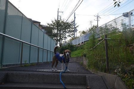 20160901佐倉城址公園01
