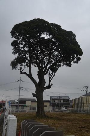 20160929依知小学校05