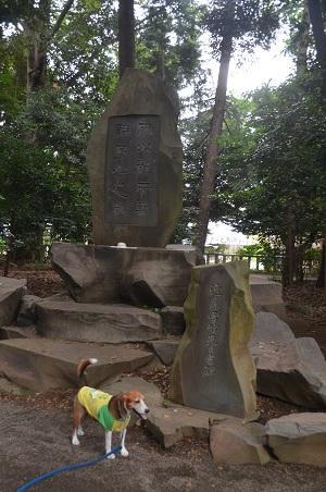 20160929平塚八景森の前鳥神社11