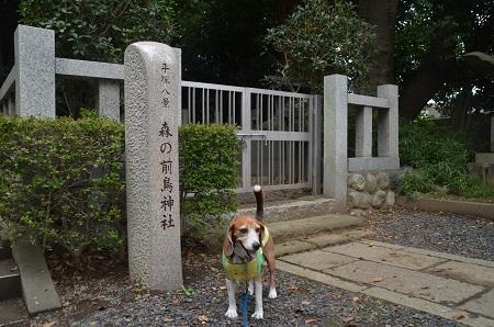 20160929平塚八景森の前鳥神社07