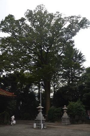 20160929平塚八景森の前鳥神社17