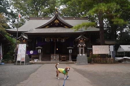 20160929平塚八景森の前鳥神社14