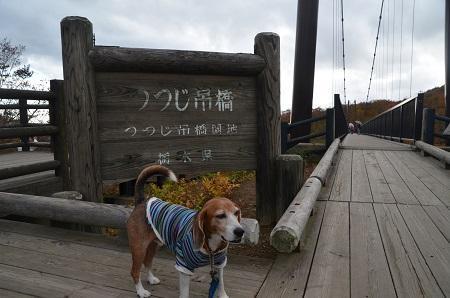 20161101つつじ吊り橋12