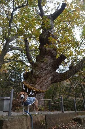 20161101温泉神社12