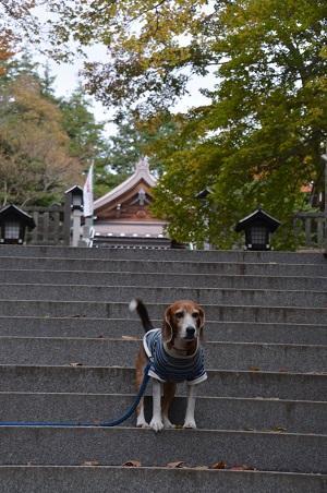 20161101温泉神社10