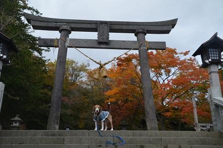 20161101温泉神社18