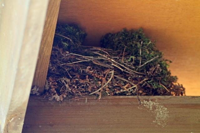 ジョウビタキの巣