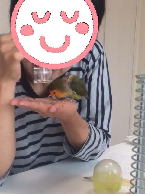 ぽんたろうちゃん20160802-1