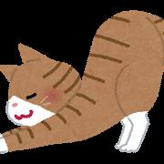 ネコ(背伸び