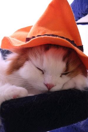 Sleep or ちゅーる!