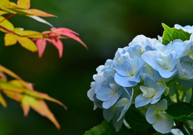 初夏の到来(1)
