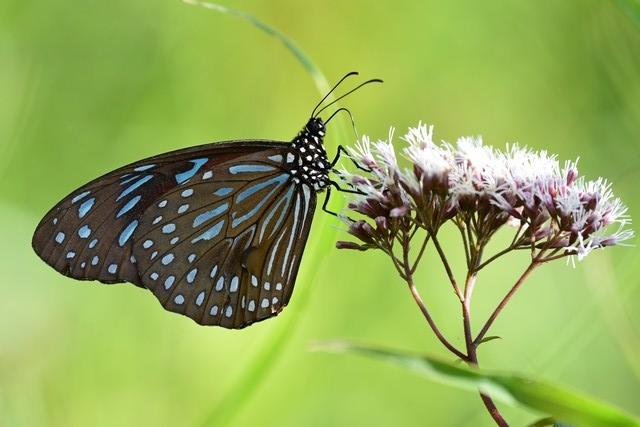 蝶の季節(2)