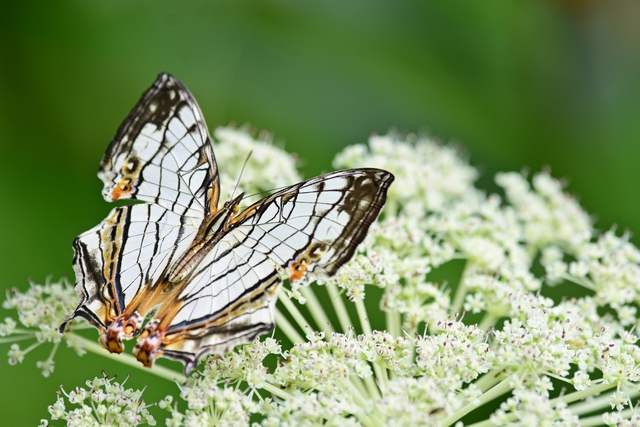 蝶の季節(3)