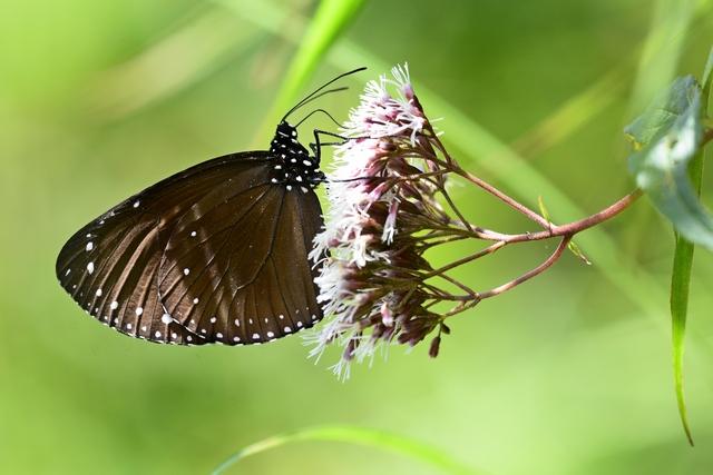 蝶の季節(1)