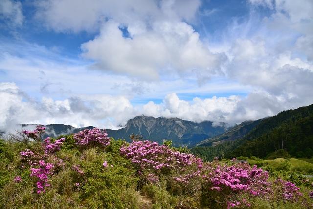 花より雲(3)