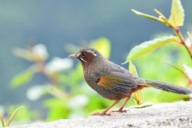 最もフレンドリーな野鳥(2)
