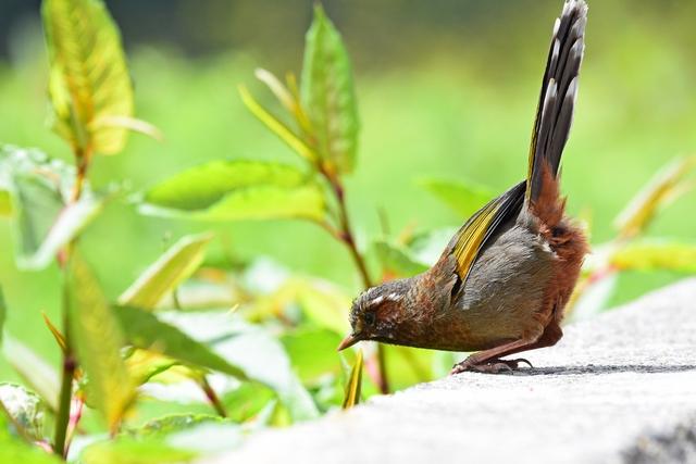 最もフレンドリーな野鳥(3)