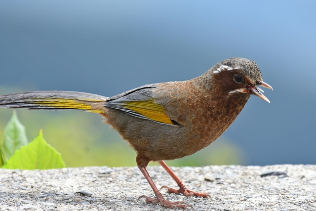 最もフレンドリーな野鳥(4)