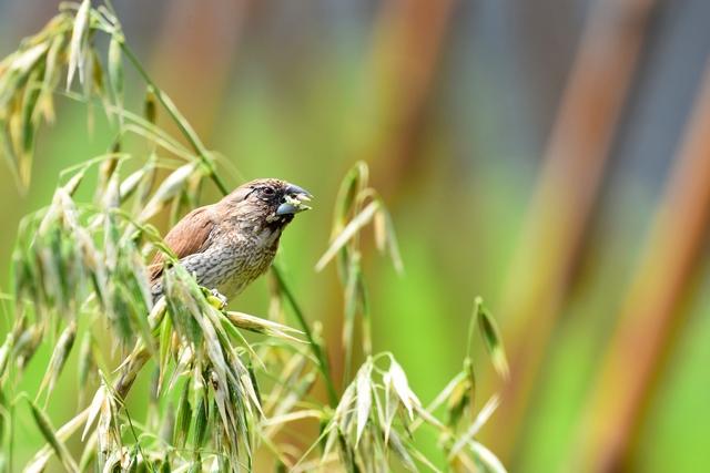 野鳥いろいろ(5)