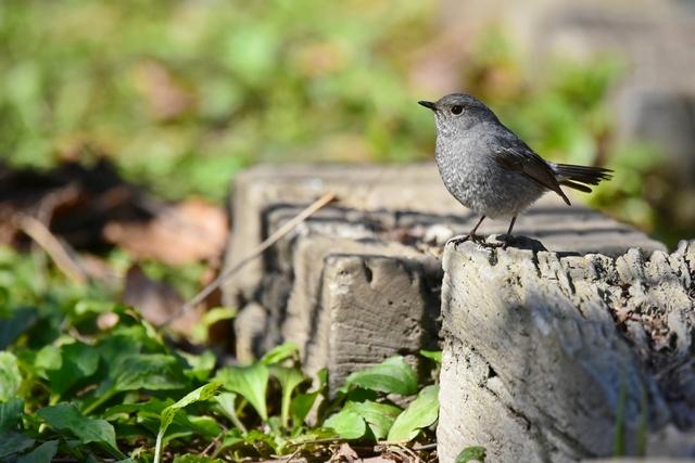 野鳥いろいろ(4)