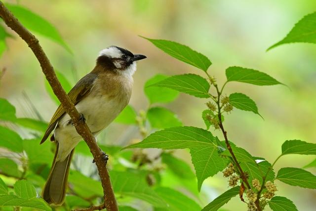 野鳥いろいろ(1)
