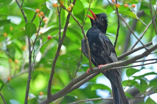 野鳥いろいろ(2)