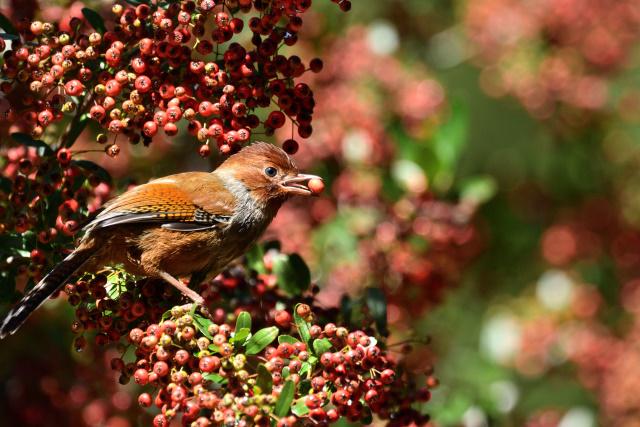 杉林溪の野鳥(2)