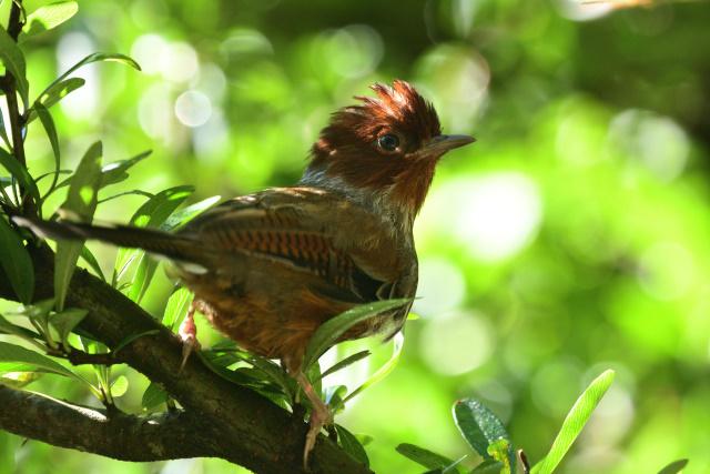 杉林溪の野鳥(1)