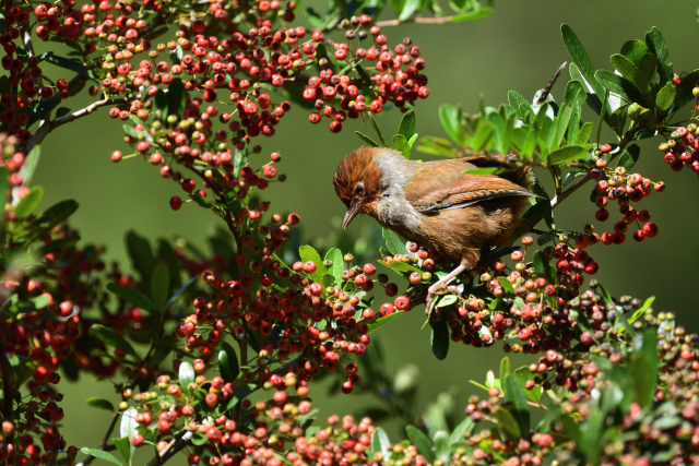 杉林溪の野鳥(3)