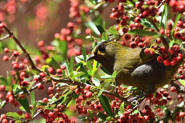 杉林溪の野鳥(6)
