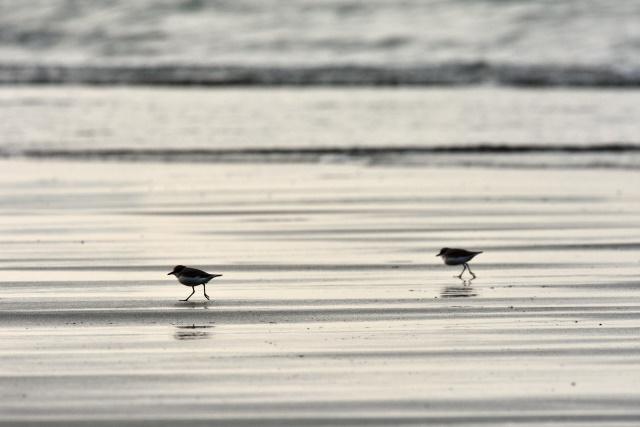 海鳥(3)