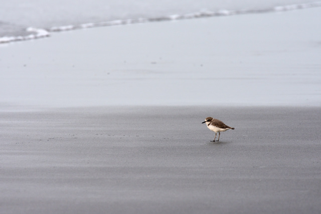 海鳥(5)