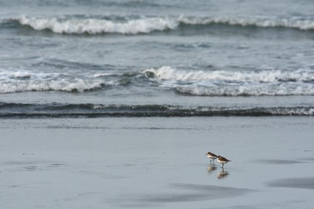 海鳥(1)