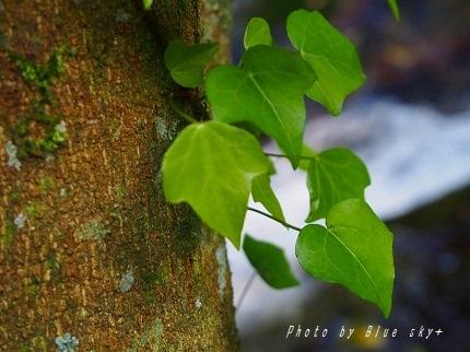 菅生木から葉