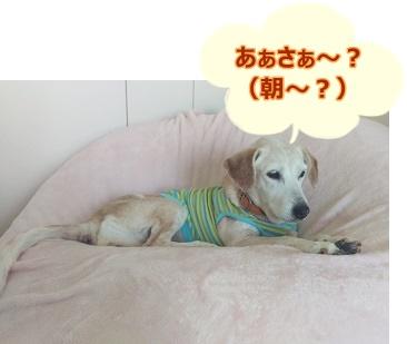 16_07_30_03.jpg