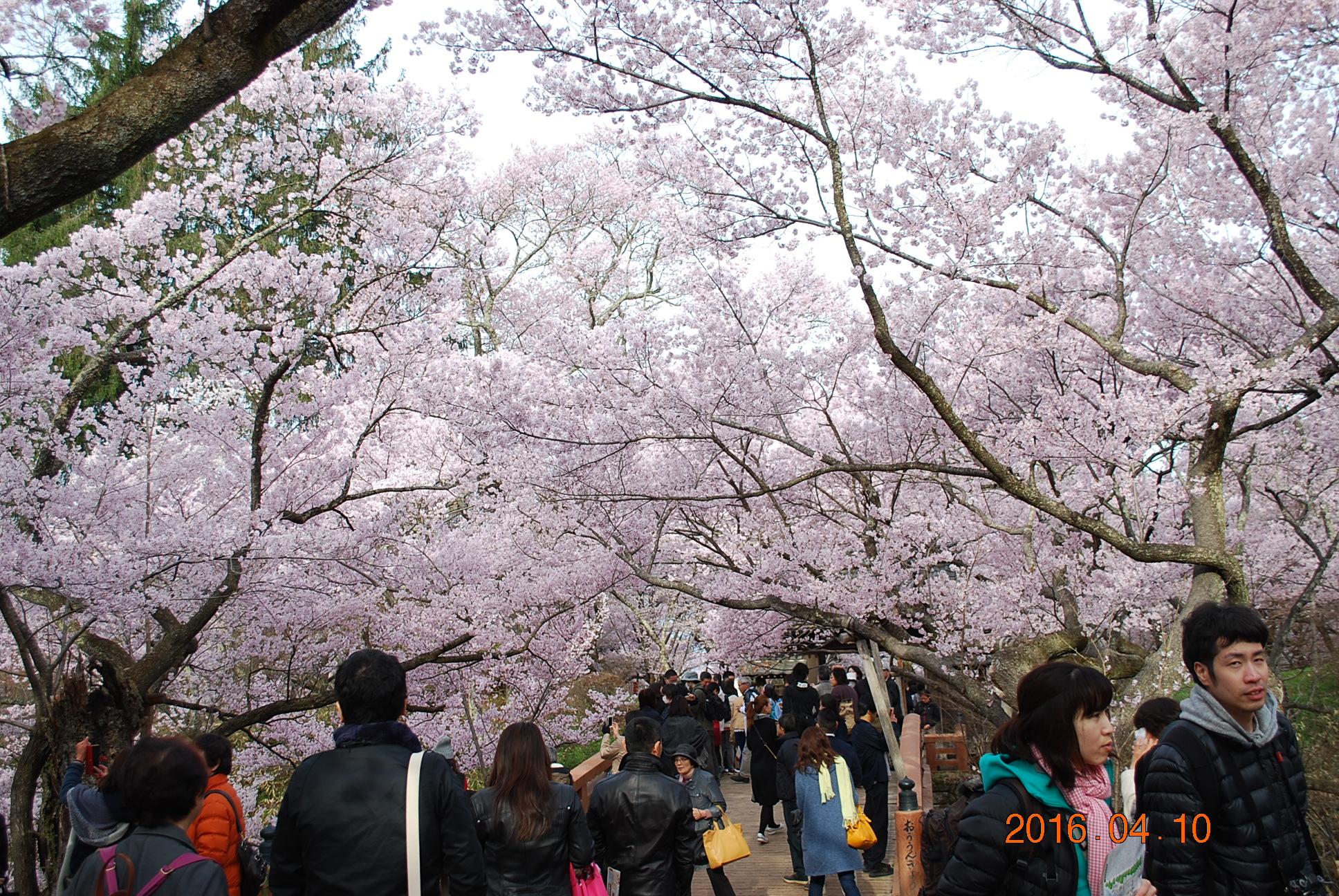 2016_0410_073819-DSC_4880.jpg