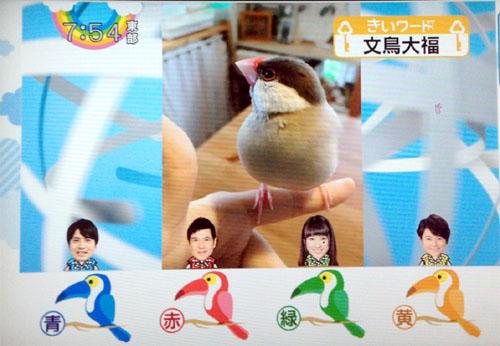 bunnchou daifuku (2)