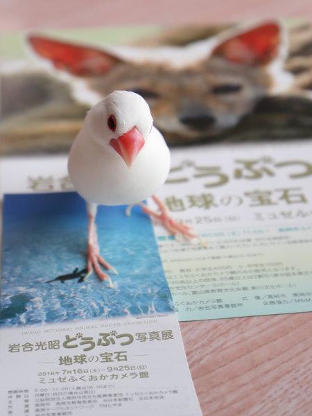 iwagou (2)