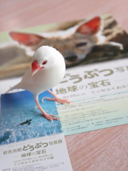 iwagou (1)