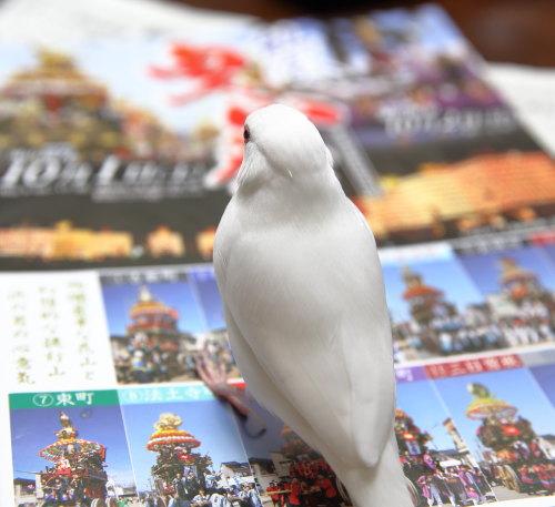 hikiyama bunn (2)
