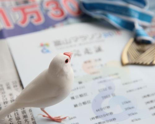 kazoku marathon (3)