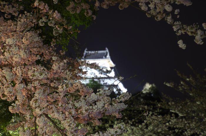 2016-4-1-1犬山城夜景