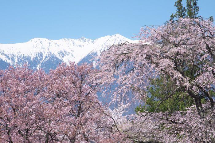 2016-4-8-1蔵澤寺