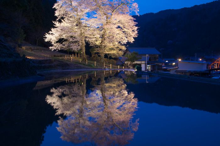 2016-4-9-1苗代桜